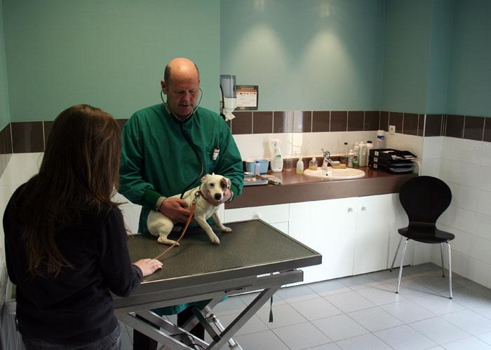 Consultation vétérinaire de médecine