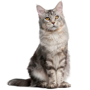 fiches conseils vétérinaire chat