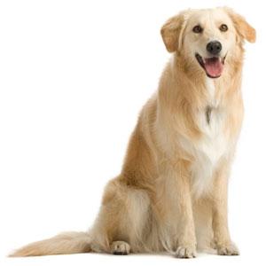 fiches conseils vétérinaire chien