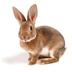 fiches conseils vétérinaire lapin