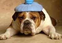chien malade urgence vétérinaire
