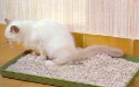 Chat qui fait pipi dans sa litière