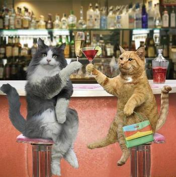 faire boire votre chat