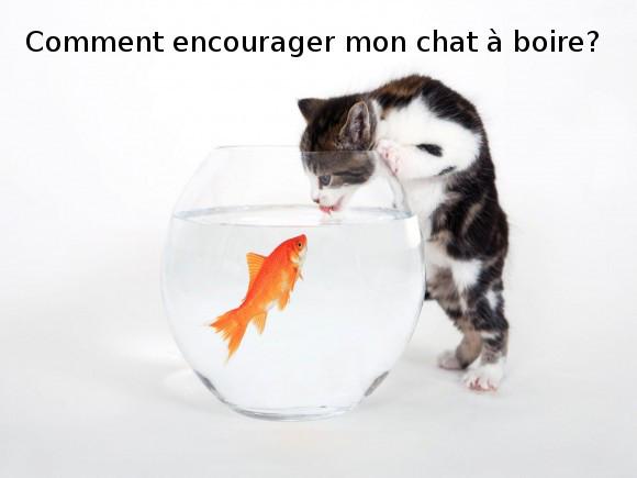comment encourager mon chat à boire