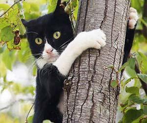 chat SOS vétérinaire