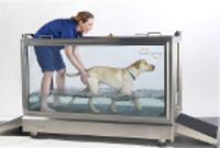 Physiothérapie chez le chien