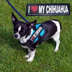 """Logo """"I love my chihuahua"""""""