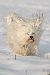 chien qui cours dans la neige