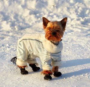 chien equipement complet manteau chaussons