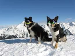chien masque de ski