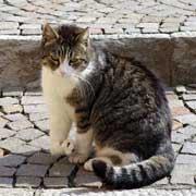 chat boiterie abcès