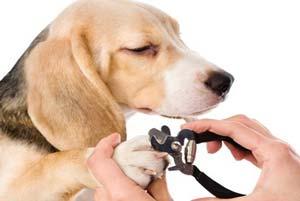 position pour couper les griffes d'un chien