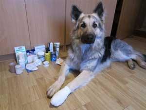 chien avec un pansement et des désinfectants