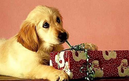 cadeau-chien-noel